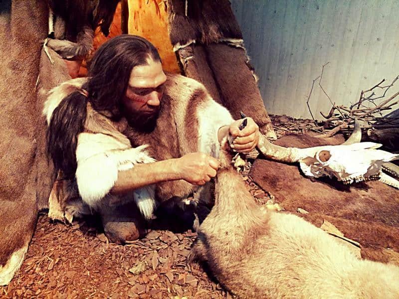 Neues vom Neandertaler